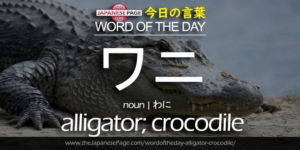 The Japanese Page Word of The Day - Alligator-Crocodile